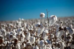 Organic Cotton | Organic Trade