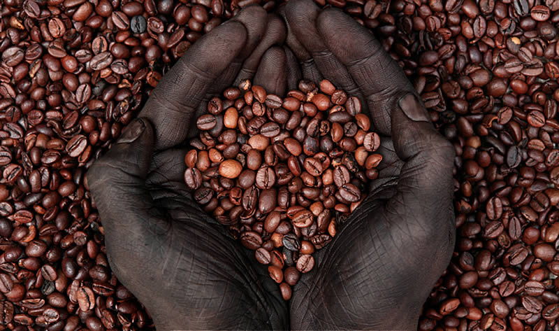 Fair Trade Coffee Beans